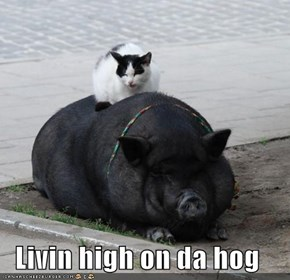 Livin high on da hog