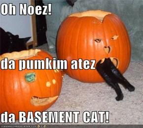 Oh Noez! da pumkim atez da BASEMENT CAT!