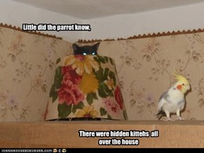 Little did the parrot know,