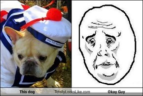 This dog Totally Looks Like Okay Guy