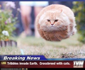 Breaking News - Tribbles invade Earth.  Crossbreed with cats.