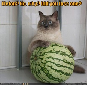 Melon? No, why? Did you lose one?