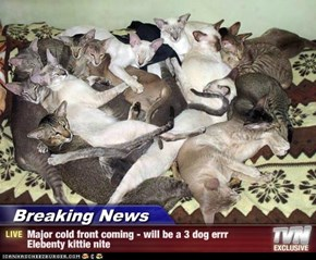 Breaking News - Major cold front coming - will be a 3 dog errr Elebenty kittie nite