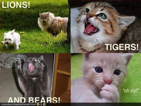 LIONS TIGERS AND BEARS !!
