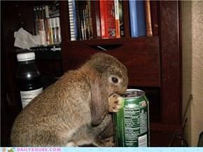 Reader Squees: Bunny Dew!