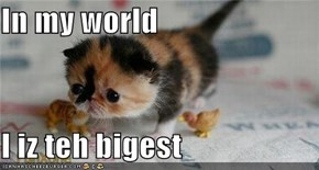 In my world  I iz teh bigest