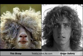This Sheep Totally Looks Like Roger Daltrey