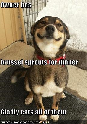 Owner has  brussel sprouts for dinner Gladly eats all of them