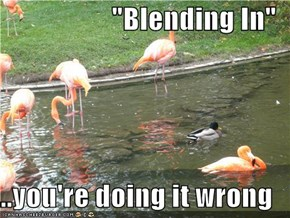 """Blending In""  ...you're doing it wrong"