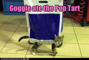 Goggie ate the Pop Tart