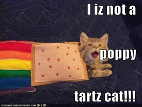 I iz not a poppy tartz cat!!!