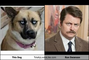 This Dog Totally Looks Like Ron Swanson