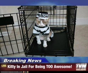 Breaking News - Kitty In Jail For Being TOO Awesome!