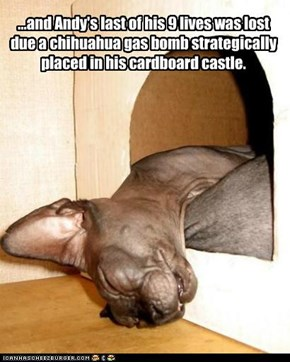 ...and Andy's last of his 9 lives was lost due a chihuahua gas bomb strategically placed in his cardboard castle.