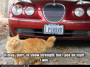 "It may ""purr"" to show strength, but I pee on stuff.I win."