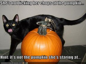 She's not licking her chops at the pumpkin...  Hint: it's not the pumpkin she's staring at...