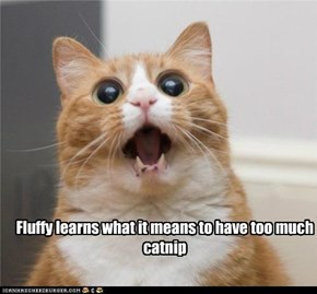 Fluffy learns what it means to have too much  catnip