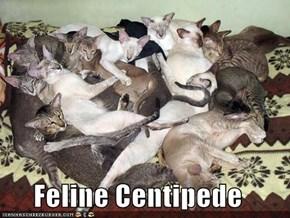 Feline Centipede
