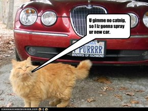 U gimme no catnip, so I iz gonna spray ur new car.