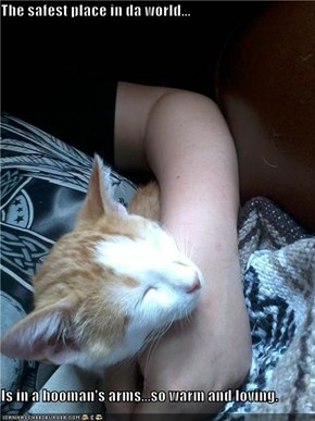 The safest place in da world...  Is in a hooman's arms...so warm and loving.