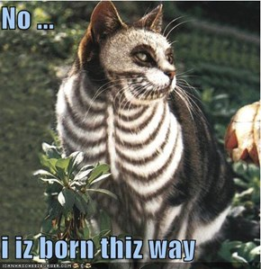 No ...  i iz born thiz way