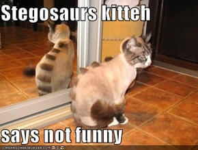 Stegosaurs kitteh  says not funny