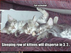 Sleeping row of kittens will disperse in 3, 2...