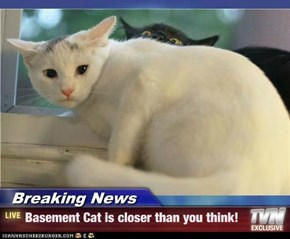 Breaking News - Basement Cat is closer than you think!