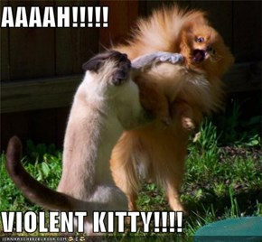 AAAAH!!!!!  VIOLENT KITTY!!!!