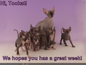 Hi, Tookat!  We hopes you has a great week!