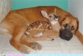 Interspecies Love: Doe Eyes + Puppy Eyes = Squee Overload