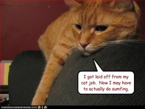 I got laid off from my cat job.  Now I may have to actually do sumfing.