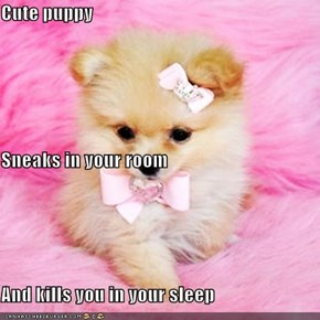 Cute puppy Sneaks in your room And kills you in your sleep