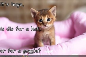 it's huge, is dis for a kat, or for a goggie?