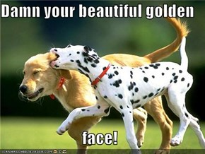 Damn your beautiful golden  face!