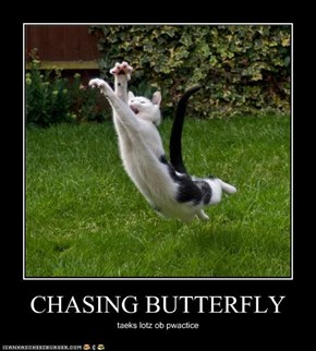 CHASING BUTTERFLY
