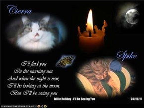 A Monday Night Candle For Our Departed FurFriends And For All Those In Need
