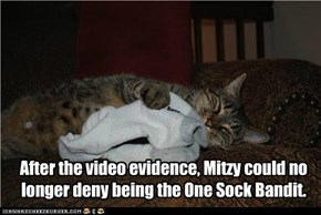 After the video evidence, Mitzy could no longer deny being the One Sock Bandit.