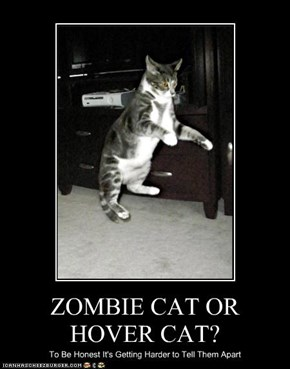 ZOMBIE CAT OR HOVER CAT?