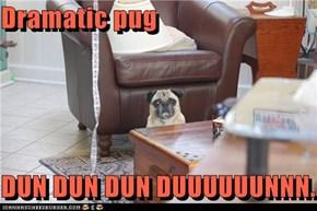 Dramatic pug  DUN DUN DUN DUUUUUUNNN.
