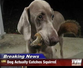 Breaking News - Dog Actually Catches Squirrel