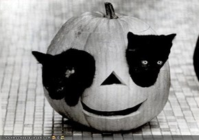 Meowloween Kittehs of teh Day: Cyoot O'Lantern