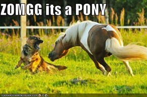 ZOMGG its a PONY