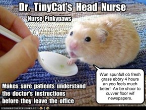 Dr.  TinyCat's  Head  Nurse