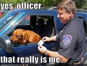 yes, officer  that really is me...
