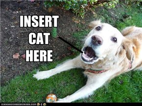 Insert the cat here
