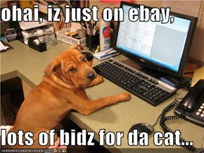 ohai, iz just on ebay,  lots of bidz for da cat...
