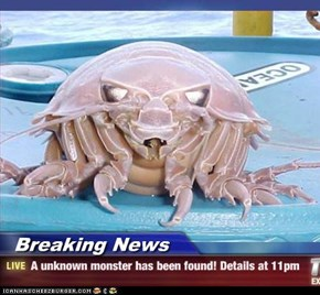 Breaking News - A unknown monster has been found! Details at 11pm