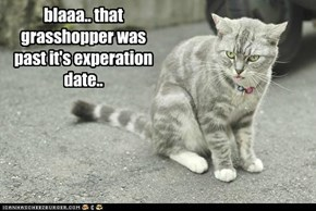 blaaa.. that grasshopper was past it's experation date..