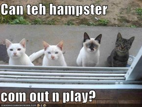Can teh hampster  com out n play?